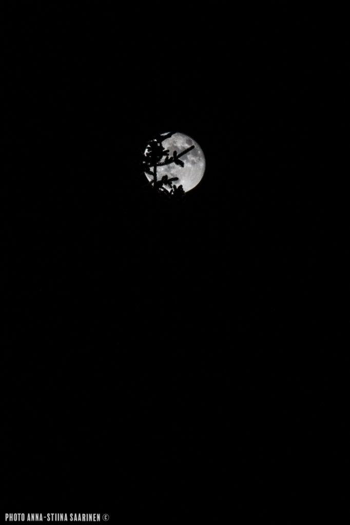 A shadow of a spruce with the Moon. Valkeakoski, Finland photo Anna-Stiina Saarinen