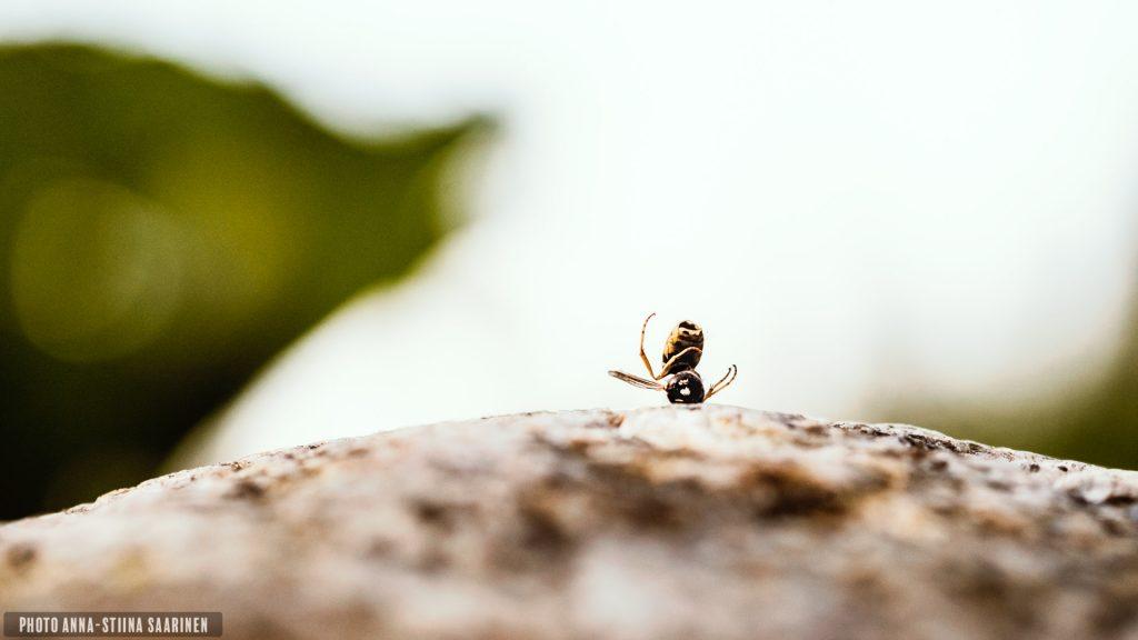 Taken empty, wasp, 2015 photo Anna-Stiina Saarinen