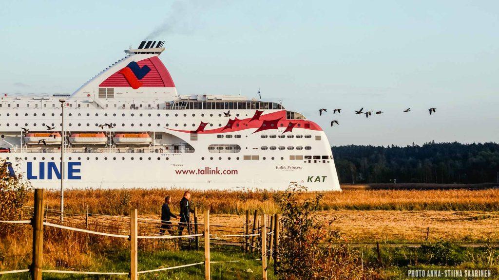 Flying Barnacle Gooses beside a giant vessel, Turku Finland. September 2015, photo Anna-Stiina Saarinen