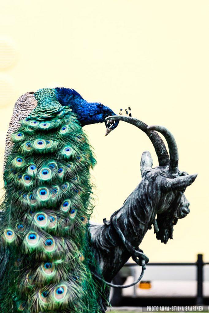 A peacock on the statue. Korkeasaari, Helsinki 2017,photo Anna-Stiina Saarinen