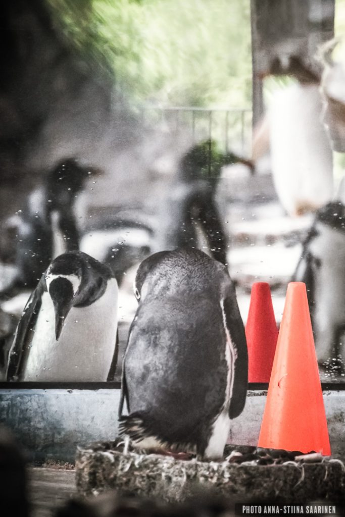 A penguin. Legoland Billund, Denmark, photo Anna-Stiina Saarinen