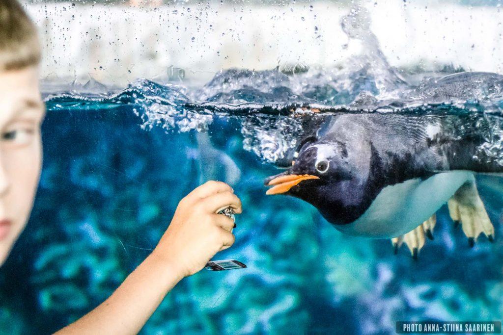 Kids teasing a penquin into acts, Lego Land Billund, Denmark, photo Anna-Stiina Saarinen