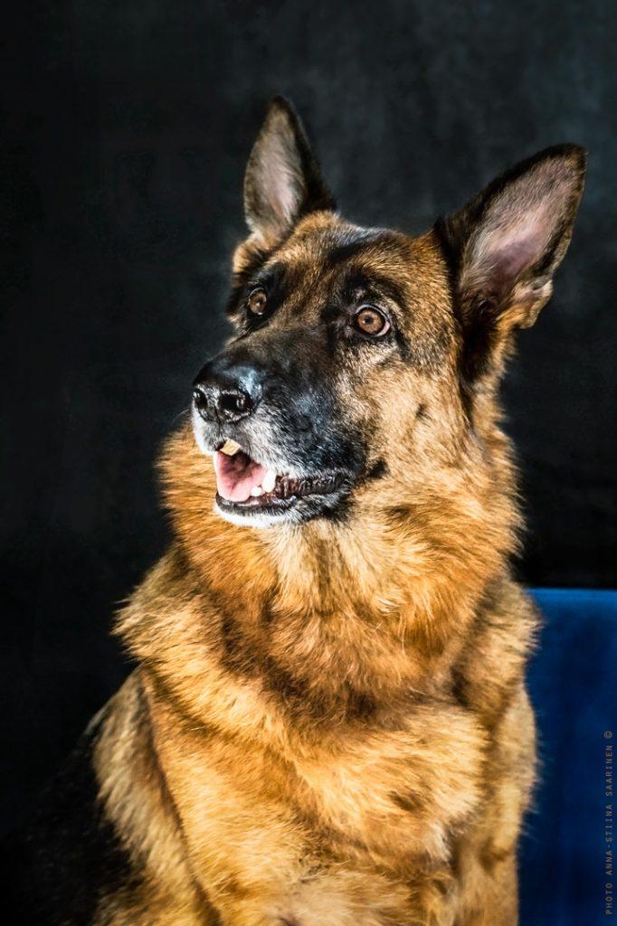 Portrait of dog Nelli, 2016, photo Anna-Stiina Saarinen