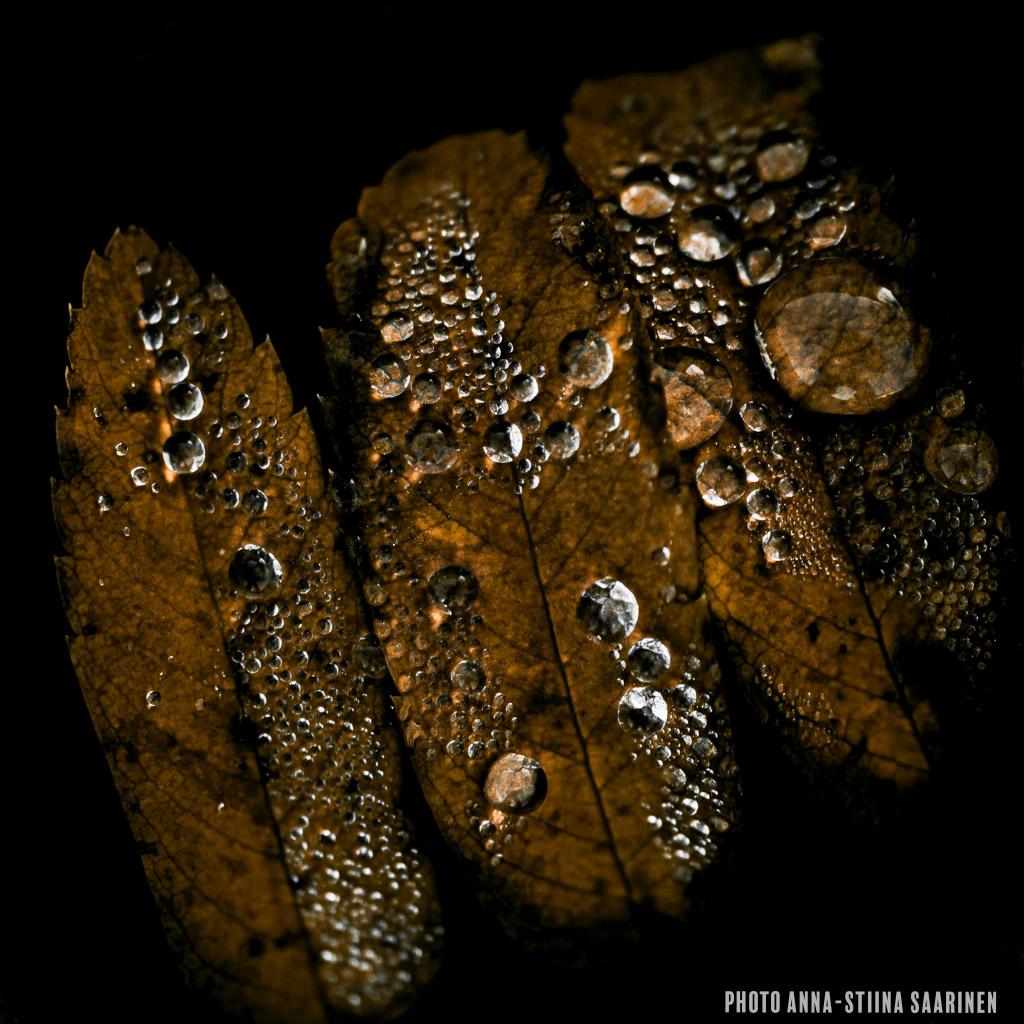 Droplets in autumn, photo Anna-Stiina Saarinen
