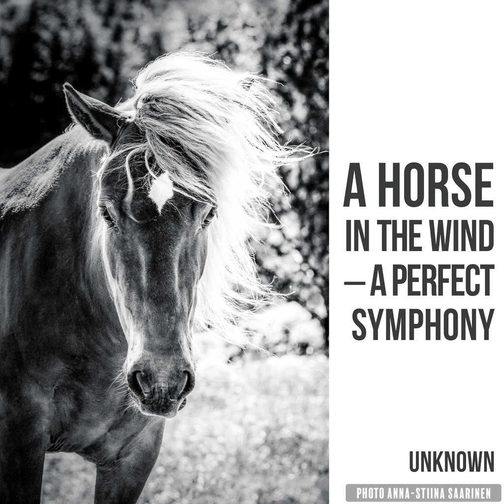 Quote A horse in the wind - a perfect symphony, photo Anna-Stiina Saarinen