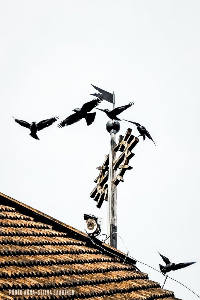 Father sees everything, church, faith, crows, photo Anna-Stiina Saarinen