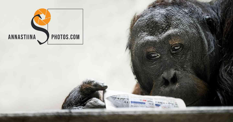 Reading gorilla le zoo du Jardin des Plantes Paris photographer photo Anna-Stiina Saarinen annastiinasphotos.com