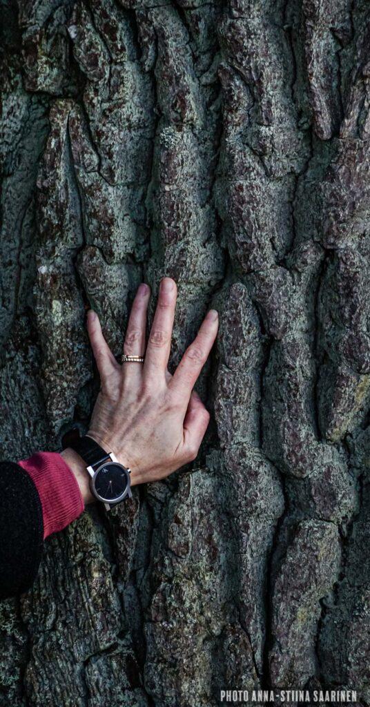 Age time hand giant tree photo Anna-Stiina Saarinen annastiinasphotos.com