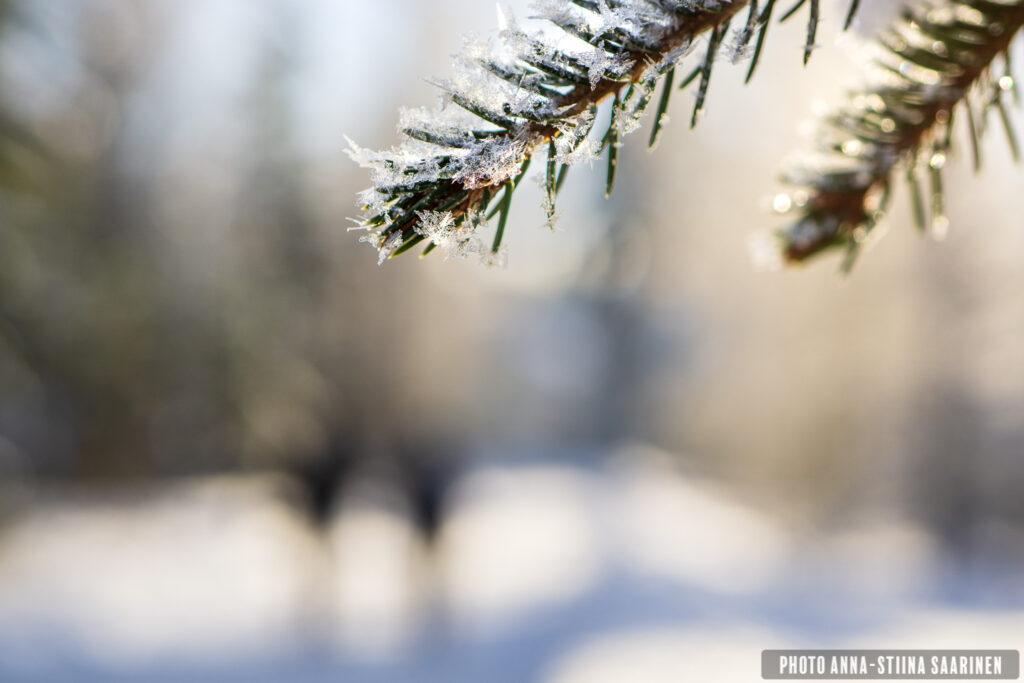 Snow flakes and a walking couple Valkeakoski Finland photo Anna-Stiina Saarinen annastiinasphotos.com