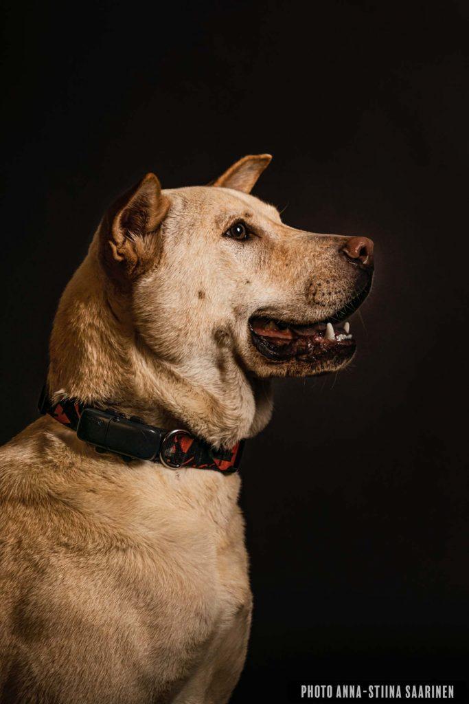 Portrait of a dog photo Anna-Stiina Saarinen annastiinasphotos.com