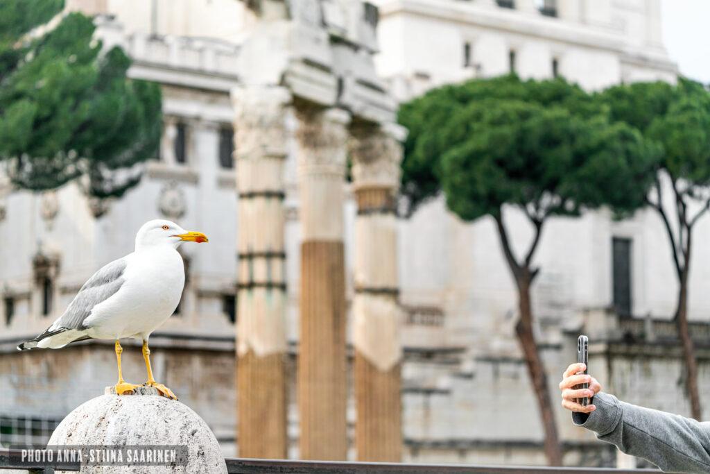 A gull beside Forum Romanum photo Anna-Stiina Saarinen annastiinasphotos.com