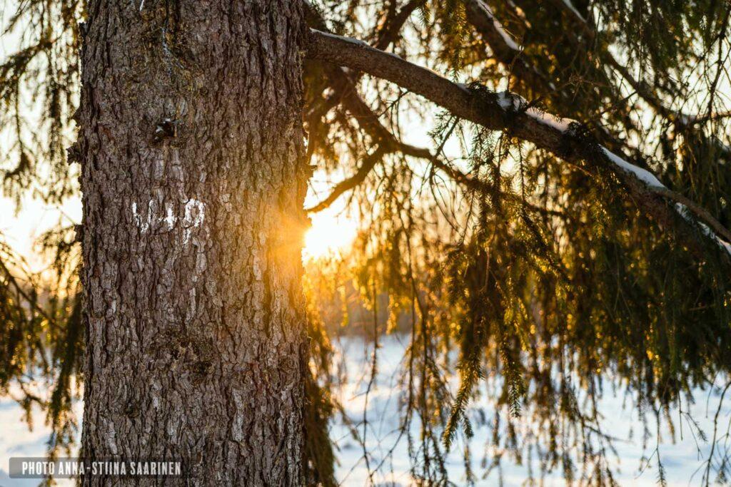 Winter light photo Anna-Stiina Saarinen annastiinasphotos.com