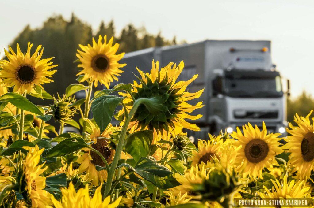 Sunflowers beside highway, truck, sunset, photo Anna-Stiina Saarinen annastiinasphotos.com